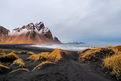 L'or des dunes (michelgroleau) Tags: vestrahorn stokknes iceland islande dune mountain montagne seascape landscape