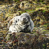 3G4A9021 (Bill16STN) Tags: northumberland farneislands seahouses bamburgh bamburghcastle shag guillemot puffin seal
