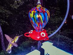 2018 - photo 157 of 365 - night shot of hummingbird (old_hippy1948) Tags: birdcam hummingbird night feeder