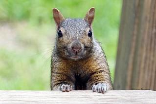 Squirrel Watching Me