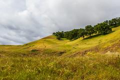 Oaks (---ZaBBeY---) Tags: sanfrancisco california bayarea canon canon80d eos canoneos80d 80d westcoast nature sunolregionalpark outdoors nautre
