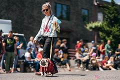 PugCrwal-112 (sweetrevenge12) Tags: portland oregon unitedstates us pug parade crawl brewing sony pugs dog pet