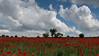 Amapolas (Carlos Javier Pérez) Tags: amapolas amapola papaverrhoeas rojo verde nubes primavera spring d500 nikond500 tamron2470g2 poppy poppies cieloconnubes campodeamapolas