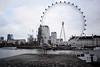 London Eye (Hachimaki123) Tags: london londres uk londoneye animal ave bird seagull gaviota