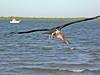 Marabou - Lamu- Kenia 2003 (wietsej) Tags: marabou lamu kenia 2003 nikon coolpix 4500 bird sea flight bif