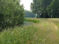 A walk along the stream (joeke pieters) Tags: 1400405 panasonicdmcfz150 bekenwandeling meddo winterswijk achterhoek gelderland nederland netherlands holland beurzerbeek landschap landscape landschaft paysage beek stream