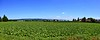 Au dessus de chez moi (Diegojack) Tags: echandens vaud suisse d7200 paysages campagne panorama assemblage verdure cultures groupenuagesetciel