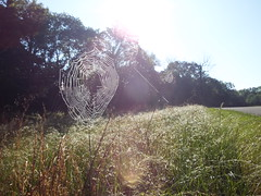 Defense (EX22218 - ON/OFF) Tags: dreamcatcher nature spider orb web grass weeds trees branches bare rye araneae spinnerets