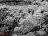 St Govans Head  31.05.2018_008 (Nigel Cliff) Tags: pembrokeshire samyang12mmf2 stgovanshead