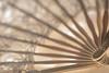 Lace Fan (Amy Maher) Tags: feelinghothothot makeabreeze 105mm nikond750 dof handheld lace work hot fan handtool macromondays