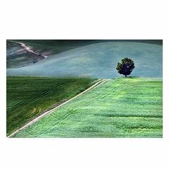 Green peace n love (Robyn Hooz) Tags: arezzo green toscana albero prato field tuscany italy italia lines linee colline hills sigh