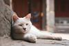 DSC01908+ (๑Kerchak๑) Tags: cat straycat streetcat meow color colour temple fayuansi china beijing cute