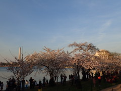 P3242879 (Dr. Fieldgood) Tags: washington dc national cherry blossom festival spring flowers mall