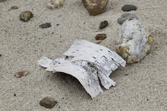 Beach Birch (brucetopher) Tags: beach find nature natural macro sand earth earthy birch bark peel rocks flotsam tree white curve arch stones pebbles sandy shore found