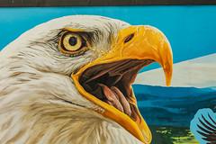 Eagle Mural (Zawodowy Fotograf) Tags: philadelphia zoo pennsylvania canon 5d mark iii ef 100400m l animas frog flamingo parrot rhino giraffe baloon owl eagle bald duck
