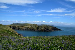 Bluebells in the wild, sea mist in the distance (karen leah) Tags: skomer pembrokeshire view landscape may spring bluesky nature outdoors beauty countryside natural unspoilt wildflower flower meadow bluebells