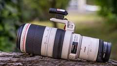Canon EF100~400/4.5~5.6L IS II USM & EF2x III on Metabones T Mark V seen by SONY ⍺7III & Sigma 50mm ƒf/1.4 DG HSM | Art on Sigma MC-11 (.: mike | MKvip Beauty :.) Tags: canonef100~400mmƒ45~56li canon canonef ef ef1004004556lisiiusm canonl 100400mm ii is usm telezoom zoom canonextenderef2xiii ef2xiii 2x metabonesefemounttsmart metabonesmarkv metabones efe eftoemount sony⍺7markiii sony⍺7iii sonyilce7m3 sonyalpha7m3 sonyalpha sony alpha emount sonyfe ⍺7iii ilce7m3 ibis sigma50mmƒ14dghsm|art sigma art 50mm ƒ14 af sigmamountconvertermc11 sigmamc11 mc11 primelens prime lensporn gearshot gear availablelight naturallight backlight backlighting wörthamrhein germany europe mth mkvip canonef100~400mmƒ45~56lisiiusm metabonesefemounttsmartadaptermarkv