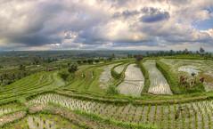 Terazzamenti balinesi (Fil.ippo) Tags: jatiluwih riceterraces bali indonesia riso terrazzamenti filippo filippobianchi landscape sky clouds paesaggio panorama nature natura work unesco agriculture