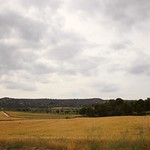 Cereals field thumbnail