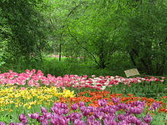 blossom of tulips (VERUSHKA4) Tags: canon europe russia moscow botanicgarden vue view garden spring blossom may springtime primavera printempes flora flower fleur tulip coloured color verdure tree branch green yellow pink red purple day leaf city ville cityscape petal nature