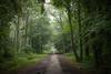 (SASHA TURPIN) Tags: mist misty forest footpath path trees mood moody soothing humid france 24105mm 5d canon