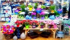 Spring flower display! (Maenette1) Tags: spring flower display jacksfreshmarket menominee uppermichigan flicker365 allthingsmichigan absolutemichigan project365 projectmichigan