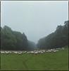 cheeeese (steve-jack) Tags: hasselblad 501cm 80mm cb fuji reala 100 film 120 6x6 hertfordshire sheep royston tetenal c41 kit epson v500
