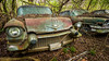 Feeling Real (Wayne Stadler Photography) Tags: preserved overgrown caddy retro vintage rustographer abandoned classic derelict cadillac vehiclesrust rusty rustography junkyard oldcarcity georgia automotive white 1957