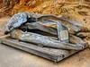Bones of a Whale Skull Point Reyes National Seashore California (Barbara Brundage) Tags: bones whale skull point reyes national seashore california