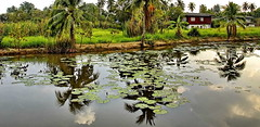 garden pool (meren34) Tags: island koh kret chaophraya river bangkok thailand reflection tropical garden tree water pool wet palm plant clouds tai travel tour farm