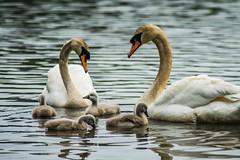 (AwfulWanderer) Tags: wildlife nature spring devon nikon birds