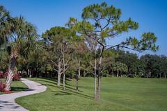 Fort Lauderdale, FL (pmenge) Tags: fortlauderdale fl way trees grass