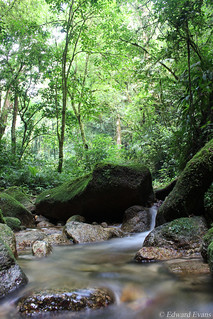 Cloud forest stream