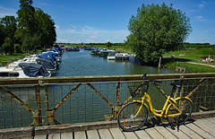 Summer on Thames (Free.heel) Tags: riverthames portmeadow oxford oxfordshire ofo ofobike nikkor2485mmf3545gedvrlens nikond810