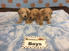 Roxie Boys 6-17