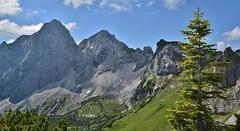 Raintaler Joch - Tannheimer Tal (A). (henkmulder887) Tags: raintalerjoch grän nesselwängle tannheimertal oostenrijk oesterreich austria gimpel bergwandelen klimmen klettern alpen bergen alps gems alpenflora gentiaan ree wald berg