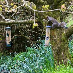 279A5523 (Plymography) Tags: plymography jason nolan devon wildlife uk gb england british animals spring garden adelaidephotographer birds feeder feeding food