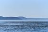 Orcas Island (Shannon L. Castor) Tags: orcasisland washington landscape water ocean mountains trees ferry