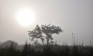 The sunrise through the fog