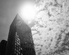 The Toren - Appearing as a Monolith (Zach K) Tags: sun sunny sunlight noon highsun monolith toren brooklyn ny nyc downtownbrooklyn sunnysky clouds 2001 flare lookingintothesun x100f fuji fujifilm acro bw blackandwhite greyscale architecture design nd ndfilter neutral density filter