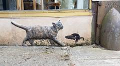 Banksy in Bremerton ? (rve13) Tags: sculpture rat galaxys9 cat bremerton banksy