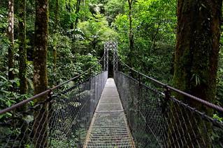 Puente hacia el bosque tropical / Bridge to the tropical forest