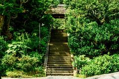 Main Gate of Tokeiji Temple, Kamakura : 北鎌倉・東慶寺 山門 (Dakiny) Tags: 2018 spring may earlysummer freshgreen japan kanagawa kitakamakura outdoor tokeiji temple nature garden tree city street architecture building gate nikon d750