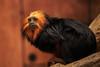 Serious monkey (Pétur Jónsson) Tags: monkey tenerife pétur jónsson zoo k55 animal addiction