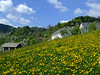 Rovte (Vid Pogacnik) Tags: slovenija slovenia outdoors hiking landscape spring dandelions farm rovte