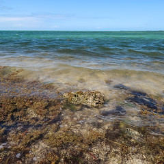 Northern U.S. people like to think of themselves going to Florida and walking around barefoot in oceanwater. (Tim Kiser) Tags: 2017 20170413 april april2017 atlanticocean atlanticoceanlandscape florida floridabay floridabaylandscape floridakeys floridakeyslandscape floridalandscape gulfofmexico gulfofmexicolandscape img8902 keylargolimestone monroecounty monroecountyflorida scoutkey scoutkeylandscape spanishharborkey spanishharborkeylandscape spanishharborkeys spanishharborkeyslandscape thehorseshoe westsummerlandkey westsummerlandkeylandscape algae bay baylandscape coastlandscape coastallandscape coastline coastlinelandscape corallimestone coralrock coralstone formerquarry landscape limestone mostlysunny oceanlandscape seaweed sharprocks shore shoreline southflorida southernflorida sunnylandscape tropicallandscape waterbottle