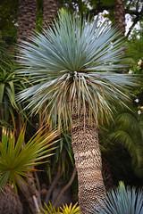 YSL: Yves Saint Laurent Garden (scuba_dooba) Tags: africa garden morocco yves shop north marrakesh saint ysl majorelle laurent jardin
