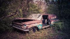 Escape Hatch (Wayne Stadler Photography) Tags: abandoned preserved junkyard georgia classic automotive derelict overgrown vehiclesrust rusty retro vintage oldcarcity rustographer rustography white chevrolet 1959