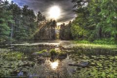Beautiful New Hampshire (Pearce Levrais Photography) Tags: hdr canon 7d markii sun sunset sundown tree pond lake lilipad rock stone reflection