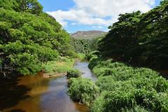Waimea River (heartinhawaii) Tags: kauai southkauai hawaii waimea waimeariver river tropical lush trees mountains viewfrombridge swingingbridge nature landscape nikond3300